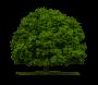 Baumpflanzaktion Mittelstrimmig 2013